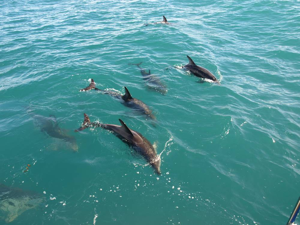 We Jumped In and Swam With These Guys